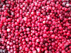 The cowberry frozen packing of 2,5 kg