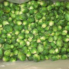 Cabbage the Bruxelles frozen