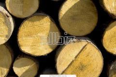 Ліс круглий (кругляк)