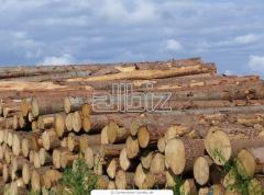 Wood construction pine