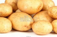 Картофель урожая 2013 ода