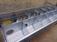 Клетка для разведения кроликов, маточная