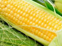 Corn, Corn technical, wholesales