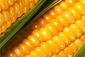 The corn is food, Grain, bean