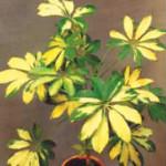 Продажа комнатных растений
