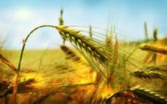 Wheat long-term to buy, Ukraine