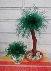 Нептунус - японские водоросли (І пучок)