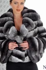 Fur coats from a chinchilla