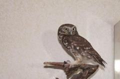 I will sell a decorative dwarfish horned owl house