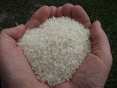 Рис круглый шлифованный Хазар