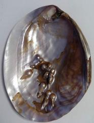 морская ракушка - жемчужница 15,1
