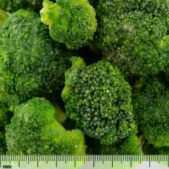 The cabbage of broccoli frozen. The frozen