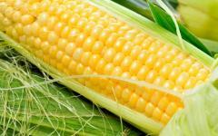 Гибрид кукурузы НС-5051*