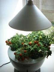 Hydroponic installation Magic Garden.