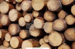 Sale of the wood for export: pine, birch, hornbeam