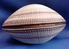 Морская ракушка - фиолетовая 10,4