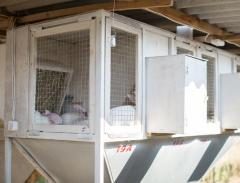 Cages for rabbits (farm), a minifarm for rabbits,