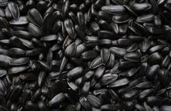 Семена подсолнечника ЗЕВС купить в Украине, Купить