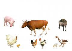 Комбикорм для животных и птиц
