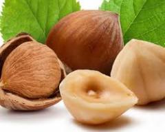 Фундук, лесной орех купить, цена, опт