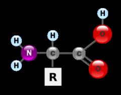 Amino acids asparaginic glutaminic sulphanilic