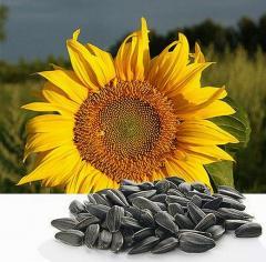 Sunflower seeds Gourmand Konditersky