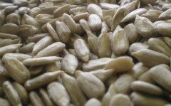 I will buy sunflower kernel confectionery grades,