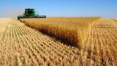 Выращивание зерновых: пшеница, ячмень, кукуруза,