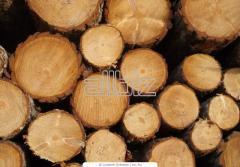 Wood round timber of myagkolistvenny and