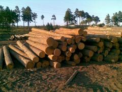 Round forest products, Wood round timber