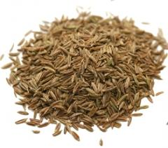 Oleoresin Caraway seeds