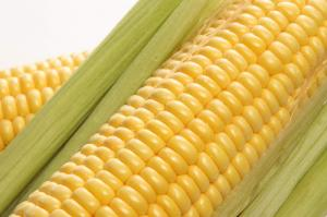 Кукуруза от производителя. ОПТ. Работаем на