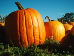 Pumpkins fresh
