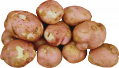 Potatoes wholesale in Ukraine