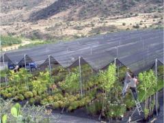 Сетка для защиты для защиты сельскохозяйственных