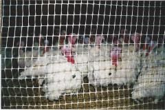 تجهیزات قفس برای پرندگان