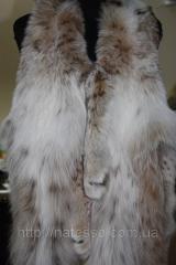 Lynx Canadian