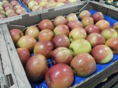 Apple Fuji varieties, apple Florina, buy apple,