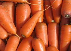 Carrots, carrots from the producer to buy carrots,