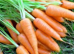 F1 Bolero carrots, Carrots F1 Cascade, Morkov