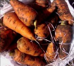 To buy carrots, I Will sell carrots wholesale,