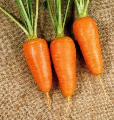 Carrots early wholesale