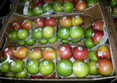 Apples from Ukraine, red apples, green apples