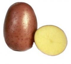 Картофель сорт Винетта