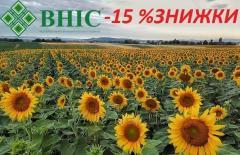 Семена подсолнечника ВНИС -15%%%