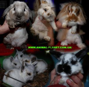 Decorative dwarfish rabbits of different breeds