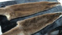 Skin of otter