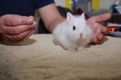 Белоснежные мини крольчата - Снежинка