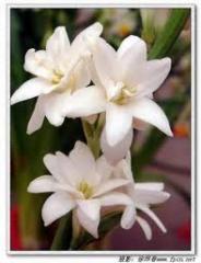 Flower Bridge (тонкий цветочный аромат),