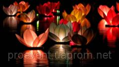 Water small lamp lily